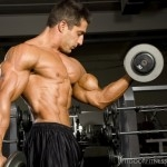 Biceps artikel